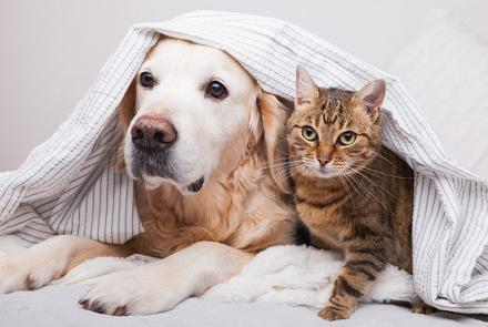Two furry friends cuddled under blanket